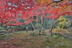 der Ahorn an den Enrian-Tempel-Herbstfarben Lizenzfreies Stockbild