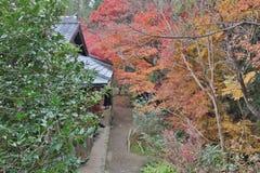 der Ahorn an den Enrian-Tempel-Herbstfarben Lizenzfreie Stockfotos