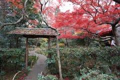 der Ahorn an den Enrian-Tempel-Herbstfarben Stockbild