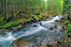 Der aktuelle Fluss das Prut Stockfotos