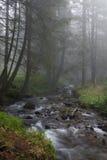 Der aktuelle Fluss das Prut Lizenzfreies Stockbild