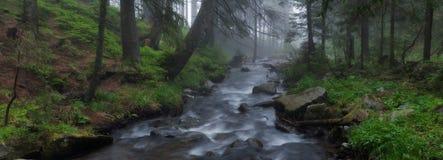 Der aktuelle Fluss das Prut in einem Nebel Stockfotografie