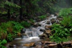 Der aktuelle Fluss das Prut in einem Nebel Lizenzfreies Stockfoto
