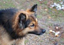 Der alarmierte rauhaarige Hund Lizenzfreie Stockfotografie