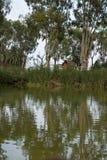 Der Albufera-Naturpark Stockbild