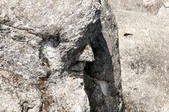 Der Alchemist - Marcahuasi-Stein-Wald - Peru Lizenzfreies Stockbild