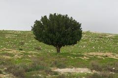 Der alleinbaum auf den Steinen Stockfoto