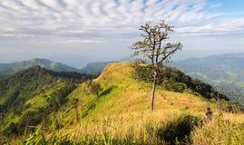 Der alleinbaum auf sawanna Gebiet Stockfotos