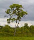 Der alleine Baum Lizenzfreie Stockfotos