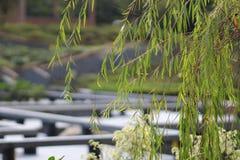 Der allgemeine Garten in HK Stockbild