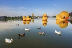 Der allgemeine Park hat einen Teich Haben Sie Entenschwimmen Stockfoto