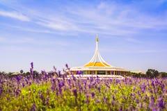 Der allgemeine Park im Traum, bei hundert schönen Tausenden Lizenzfreies Stockbild