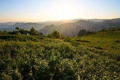 Der Alpenwiesesonnenuntergang Stockbild