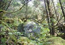 Der alte alaskische Wald Lizenzfreie Stockfotos