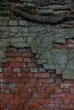 Der alte Backsteinmauer- und Baumstamm Lizenzfreie Stockfotos