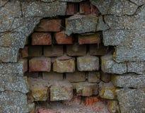 Der alte Backsteinmauer- und Baumstamm Lizenzfreies Stockfoto