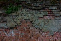 Der alte Backsteinmauer- und Baumstamm Stockfotografie