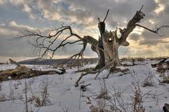Der alte Baum Stockfotografie