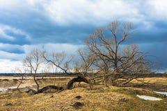 Der alte Baum Lizenzfreie Stockfotos