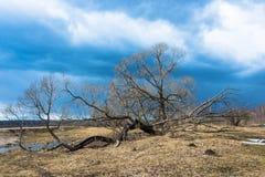 Der alte Baum Lizenzfreie Stockfotografie