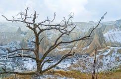 Der alte Baum Lizenzfreies Stockbild