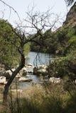 Der alte Baum durch den Fluss Lizenzfreie Stockfotos