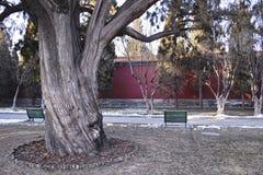 Der alte Baum in einem Park Lizenzfreies Stockfoto