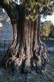 Der alte Baum in Himmelstempel Stockfotografie