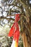 Der alte Baum hing mit roter Gebetsflagge Lizenzfreie Stockfotos