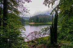 Der alte Baum im Wald auf der Bank des Sees an einem bewölkten Tag Stockbilder