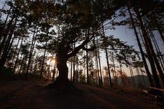 Der alte Baum nahe Belintash, Bulgarien Lizenzfreie Stockfotos