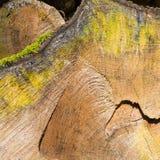 Der alte Baum wurde verringert Stockfotografie