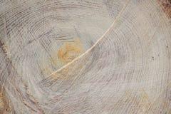Der alte Baum wurde vom Gärtner, natürlicher Hintergrund geschnitten Stockfoto