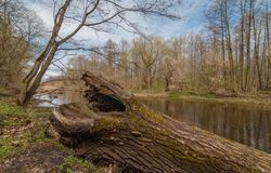 Der alte Baumstamm liegt auf der Flussbank nahaufnahme Stockbild