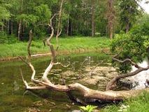 Der alte Baumstumpf. Stockfotos