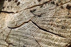 Der alte Baumstumpf, der Ringe des Alters zeigt, zeichnet Lizenzfreies Stockbild