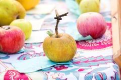 Der alte braune Apfel Stockbilder