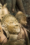 Der alte Buddha-Kopf an der Wurzel des Baums Lizenzfreie Stockfotografie