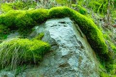 Der alte Felsen im Holz Moos-gewachsen Stockfotografie