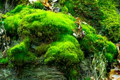 Der alte Felsen im Holz Moos-gewachsen Stockbild