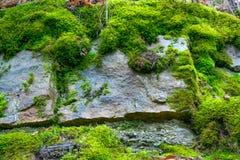 Der alte Felsen im Holz Moos-gewachsen Stockfoto