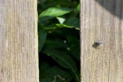 Der alte hölzerne Zaun Durch das Loch sehen Sie die grünen Blätter Auf Stockfotos