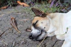 Der alte Hund sind Schlaf Lizenzfreie Stockbilder