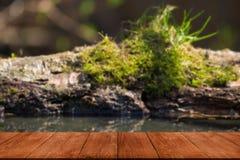 Der alte Klotz mit Moos auf einem Teich im Wald Ansicht von hölzernem t Stockbilder