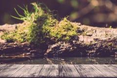 Der alte Klotz mit Moos auf einem Teich im Wald Ansicht von hölzernem t Stockbild