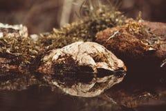 Der alte Klotz mit Moos auf einem Teich im Wald Selektiver Fokus T Stockbilder