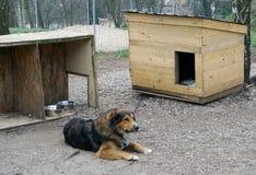 Der alte kranke Hund Lizenzfreie Stockfotos