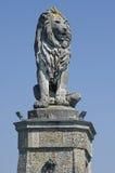 Der alte Löwe von   Stockfotos