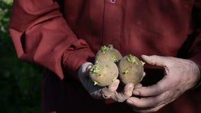 Der alte Mann übergibt das Halten von Kartoffeln für das Pflanzen stock video footage