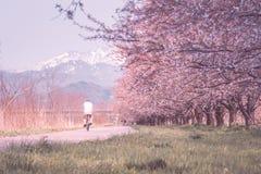 Der alte Mann, der ein Fahrrad am Kaji-Riverbank reitet, war ein berühmter Platz f Lizenzfreie Stockfotografie